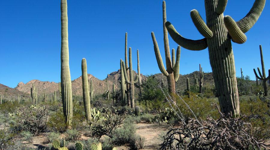 Marriott's Canyon Villas at Desert Ridge – Phoenix, AZ